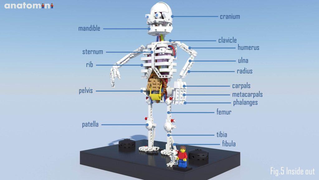 LEGO Ideas -Anatomini